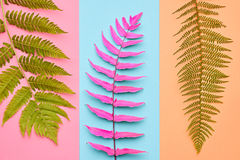 Fern Tropical Leaf. Floral Summer Fashion. Minimal. Fern Fashion. Tropical Leaf. Floral Leaves Concept. Vivid Design. Art Gallery. Creative Bright Trendy Color Stock Photos