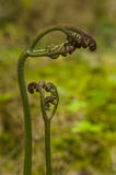 Fern fiddleheads sprout from Rain Forest floor stock photo