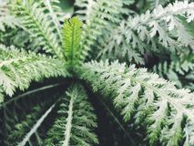 Fern. Flower fern plant tropical cold Stock Photos