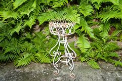 Fern and flower stand Royalty Free Stock Photos