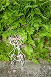 Fern and flower stand Royalty Free Stock Photography