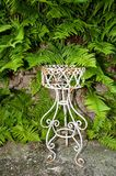 Fern and flower stand Royalty Free Stock Photo