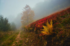 Fern Fog Autumn Royalty Free Stock Photo