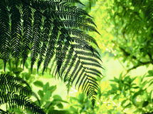 Fern foliage. Abstract background in green stock photos