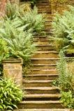 Fern Foliage Steps Stock Photo