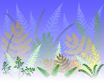 Fern forest. Vector background of colorful fern leaves Royalty Free Stock Images