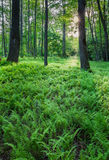 Fern forest Stock Images