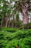 Fern Forest Arkivfoton