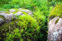 Fern Forest Fotografia Stock Libera da Diritti