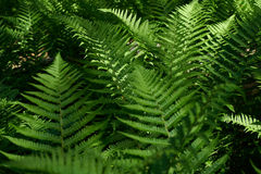 Fern. In forest Stock Photos