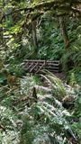 Fern Forest Photo stock