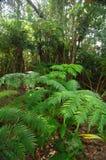 Fern Forest stockbilder