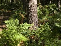 Fern in the forest Stock Images