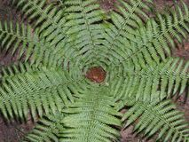 Fern in the forest. Fifteen leaves of fern. In a circle Stock Images