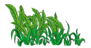Fern forest grass. Illustration of plants  on white background cartoon style Royalty Free Stock Photos