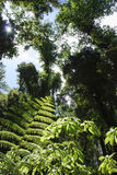 Fern in the forest Stock Photography