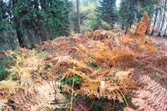 Fern forest with many dried leaves in autumn Stock Photos