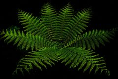 Fern forest in milfordsound Royalty Free Stock Photos