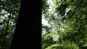 Fern in the forest stock footage