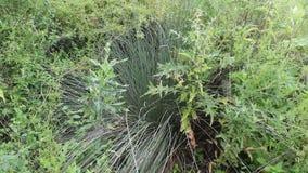 Fern forest. The fern was taken in a small Bulgarian farm stock footage
