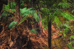 In the fern forests of New Zealand Royalty Free Stock Photo