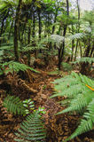 In the fern forests of New Zealand Royalty Free Stock Image