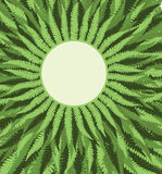 Fern Frame Background. Fern Frame Lush Foliage Background Royalty Free Stock Photo