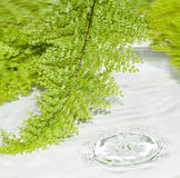 Fern frame and splash water. On white Royalty Free Stock Photo