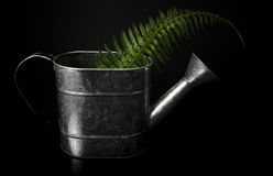 Fern frawn in Watering Can. A metal watering can holds a fresh fern frawn. Isolated on black Stock Photography