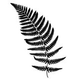 Fern frond black silhouette. Royalty Free Stock Photo
