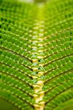Fern frond. Close up of a fern frond in the Hawaii Volcanoes National Park on Big Island, Hawaii, USA Royalty Free Stock Photography