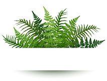 Fern frond frame. Polypodiophyta plant leaves stock illustration