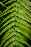 Fern frond with green leaflets Stock Photos