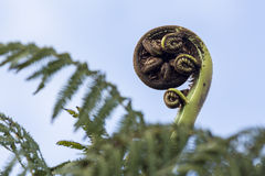 Fern Frond Royalty Free Stock Photos