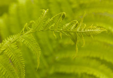 Fern Frond Stock Photos
