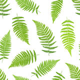Fern frond silhouettes seamless patte Stock Image