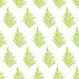 Fern frond silhouettes seamless pattern. Stock Images
