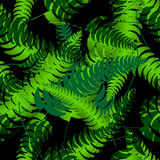 Fern frond silhouettes seamless pattern. Vector illustration Stock Photography