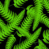 Fern frond silhouettes seamless pattern. Vector illustration Royalty Free Stock Photography