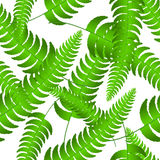 Fern frond silhouettes seamless pattern. Vector illustration. Fern frond silhouettes seamless pattern. Vector summer illustration Stock Photos