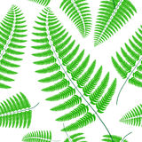 Fern frond silhouettes seamless pattern. Vector illustration. Fern frond silhouettes seamless pattern. Vector summer illustration Stock Images