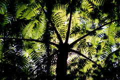 Fern Fronds. Underneath a canopy of fern fronds Royalty Free Stock Photos