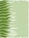Fern Fronds Background. Shades of Green Fern Fronds Background Royalty Free Stock Image