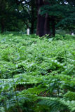 Fern fronds in a forest Stock Photos