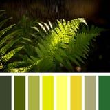 Fern fronds in summer rain palette Stock Photo