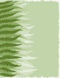 fern fronds tło Obraz Royalty Free