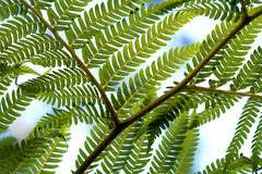 Fern fronds Stock Photos