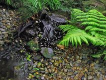 Fern Garden Royalty Free Stock Photos