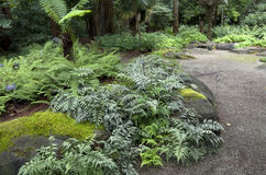 Fern garden Royalty Free Stock Image