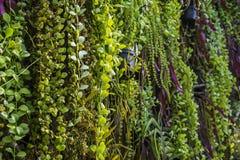Fern garden indoor Royalty Free Stock Image